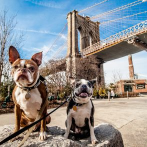 5 Fun, Unique Activities and Venues for Dogs and Their Humans in New York City