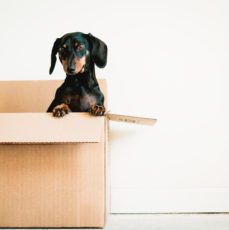 How to Write a Pet Resume for Renting