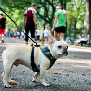 The Most Dog-Friendly Neighborhoods in NYC