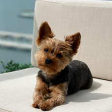 Why Outdoor Apartment Space is Important for Your Pet